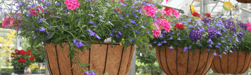 Hanging baskets website header