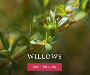 bnb willows