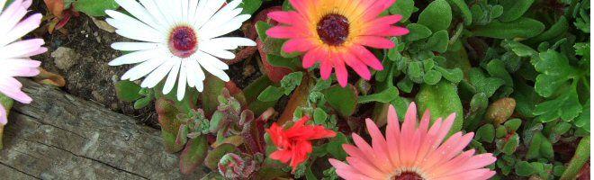 Best Plants For Heat Sun