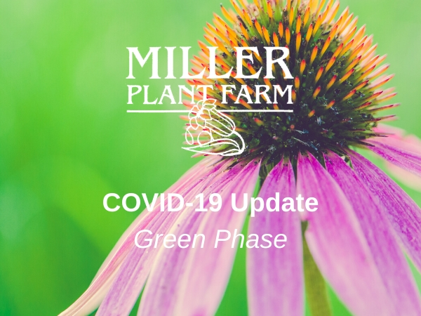 COVID-19 Green Phase Update