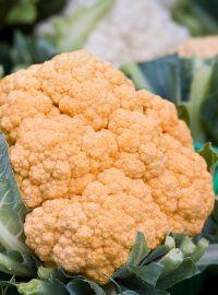 Orange Cauliflower - Cheddar