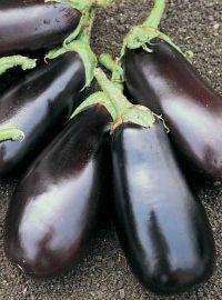Eggplant - Classic Hybrid