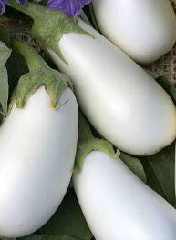 Eggplant - Ghostbuster Hybrid