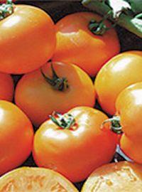 Carolina Gold Tomato
