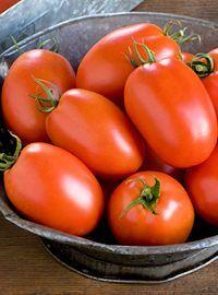 Roma Plum Regal Tomato
