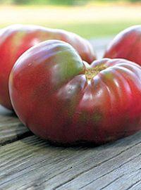 Cherokee Purple Tomato